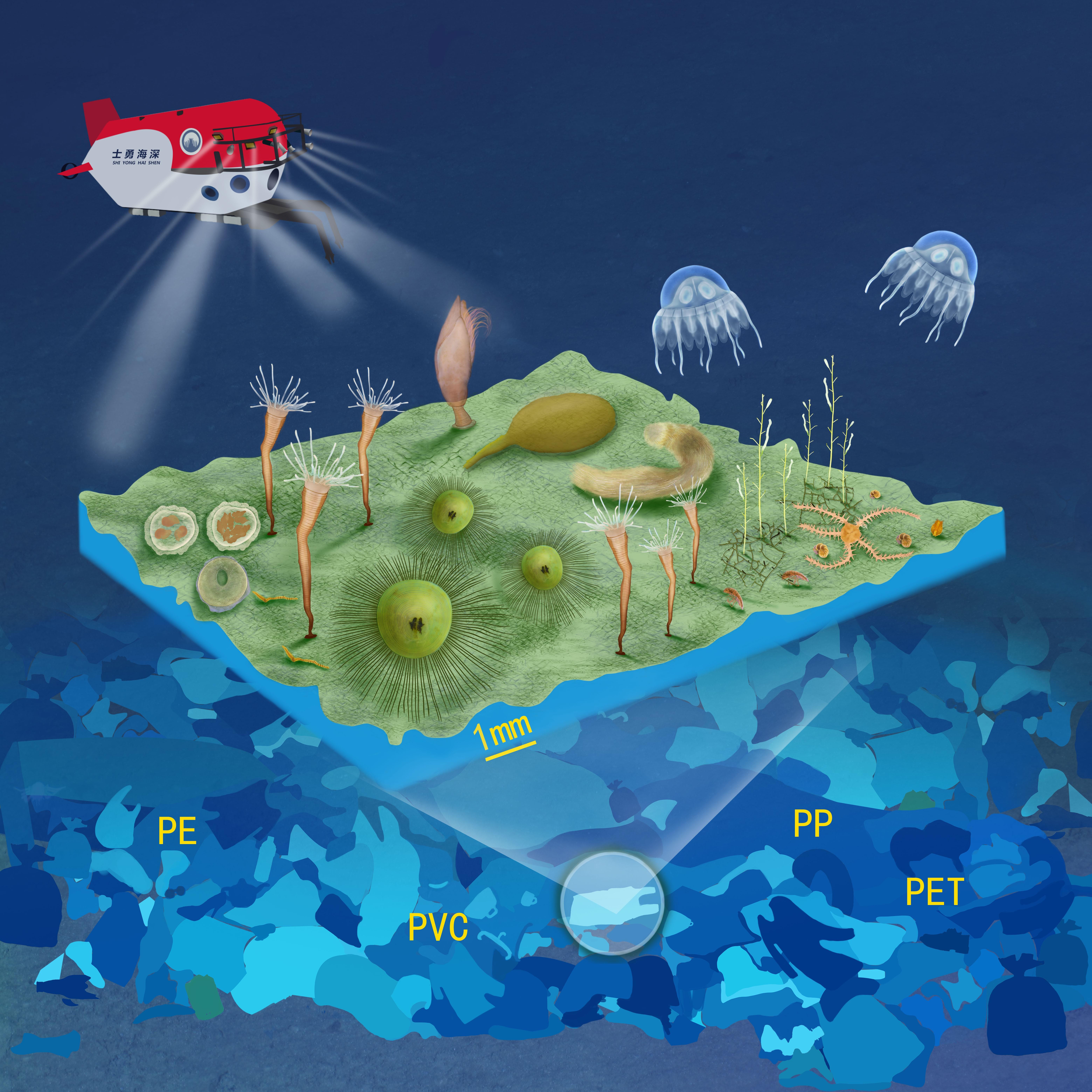 研究人员发现深海塑料生物群落并被《自然》遴选为研究亮点